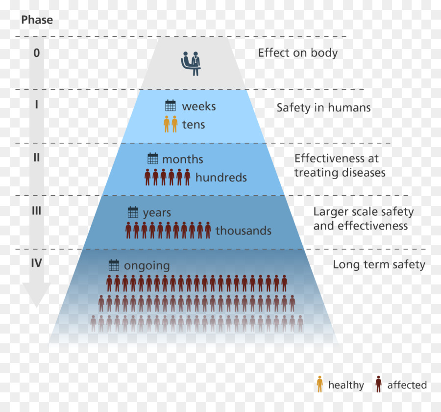 Clinical trial drug development pharmaceutical phases