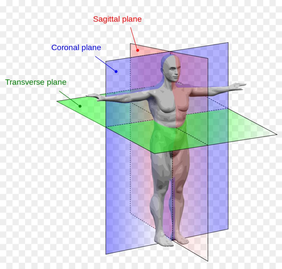 Anatómica plano de la Anatomía del cuerpo Humano, plano Sagital ...
