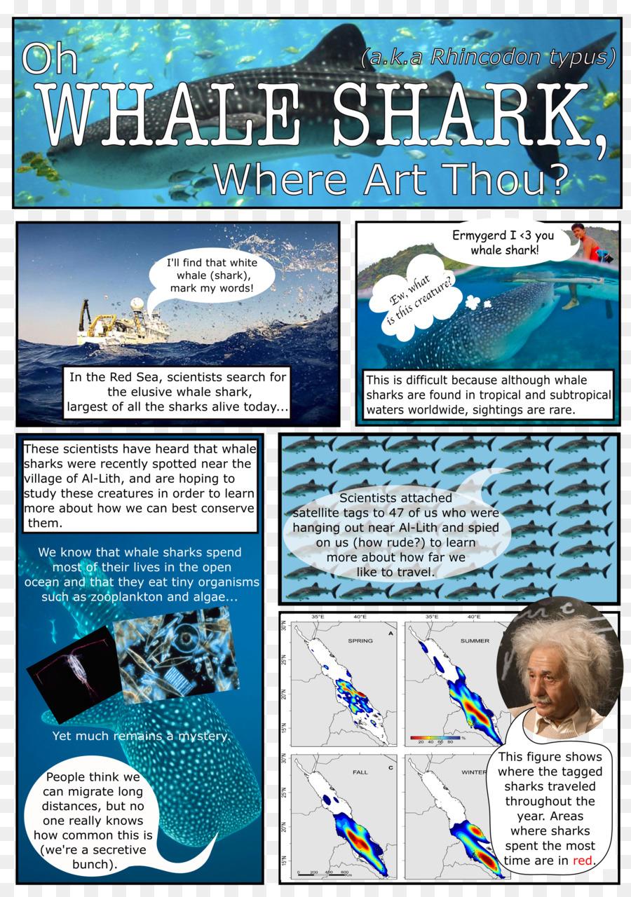 La ballena azul Cetacea ciclo de vida Biológico de Agua Diagrama de ...