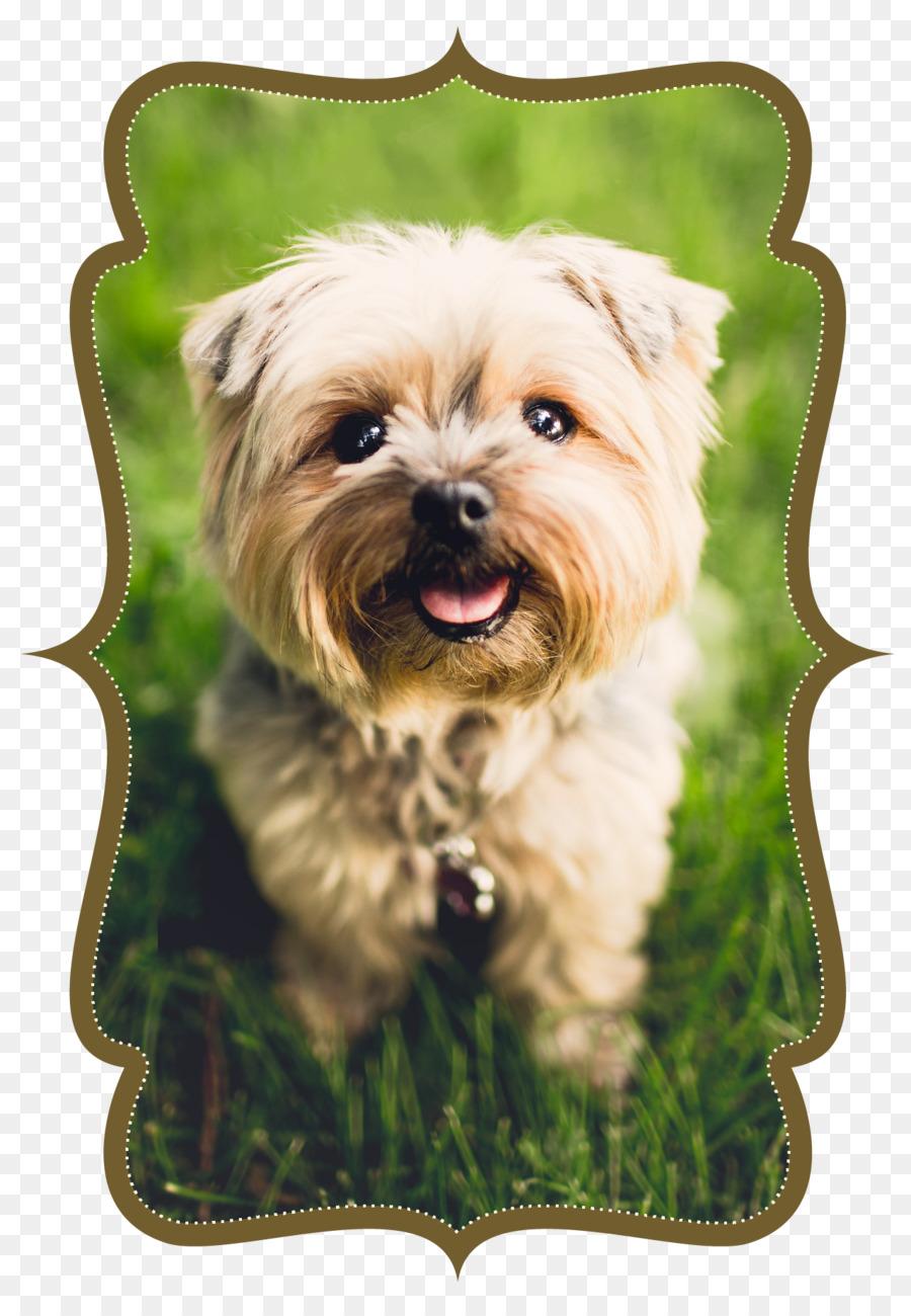 Hund Katze Tierarzt Haustier Wohnung Hund Png Herunterladen