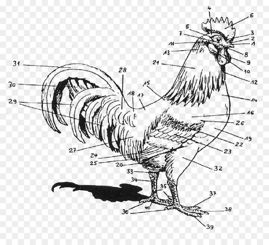 Rooster Chicken Anatomy Human body Regioni del corpo umano - chicken ...