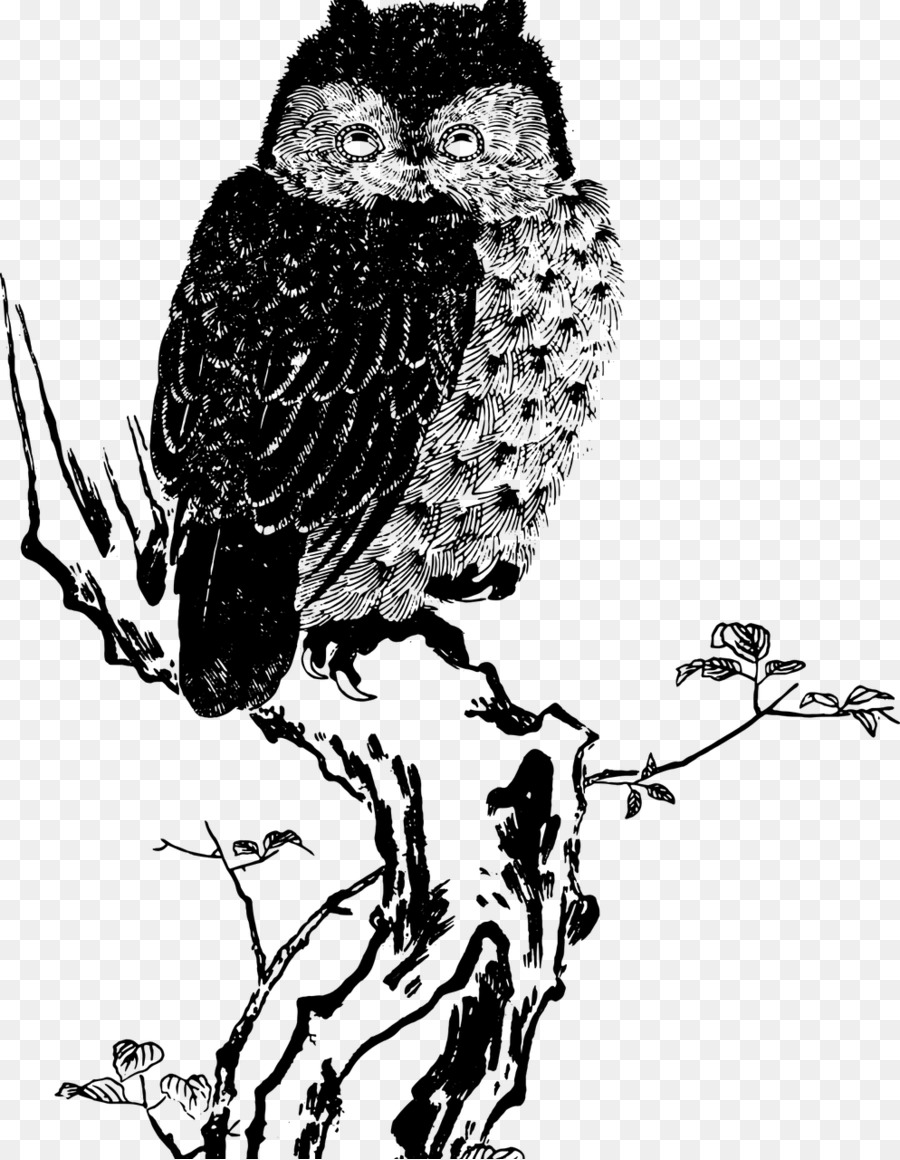 64  Gambar Burung Hantu Png  Terbaru Free