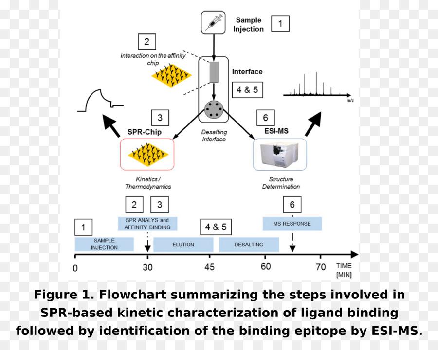 Size Exclusion Chromatography High Performance Liquid Chromatography