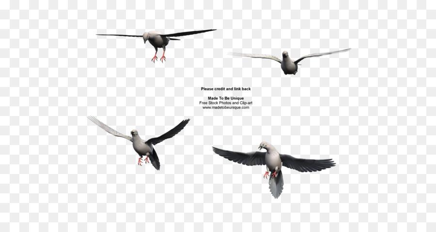 Columbidae la migración de las Aves Duelo de la paloma de Vuelo - El ...