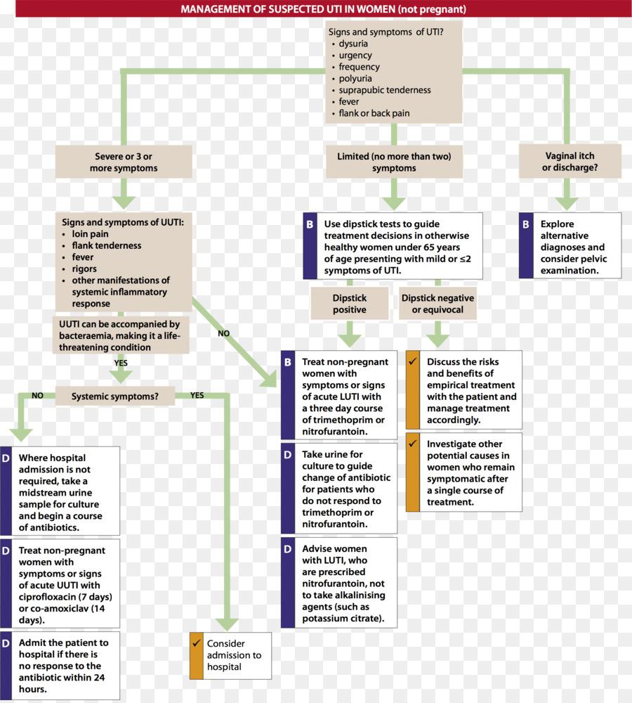 Infección del tracto urinario sistema Excretor Médicos de la pauta ...