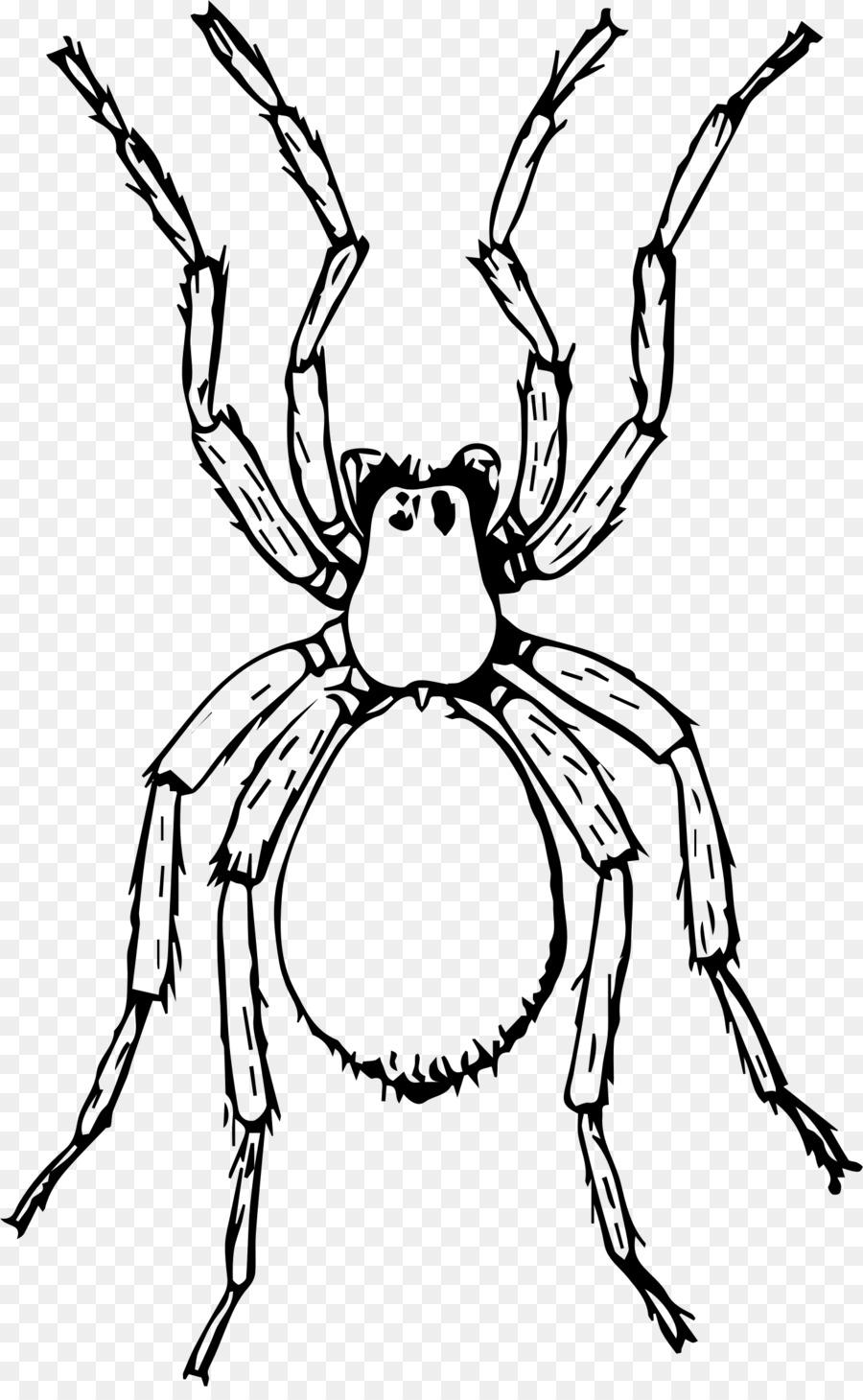 Miss Spider Dibujo Tía Esponja Clip art - araña png dibujo ...