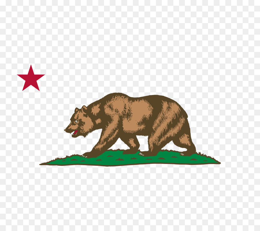 California cool. Bear png download free