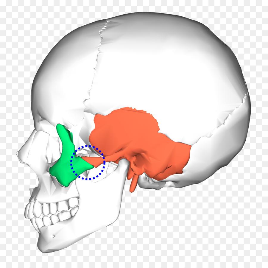 Occipital Bone Temporal Bone Skull Sphenoid Bone Skull Png