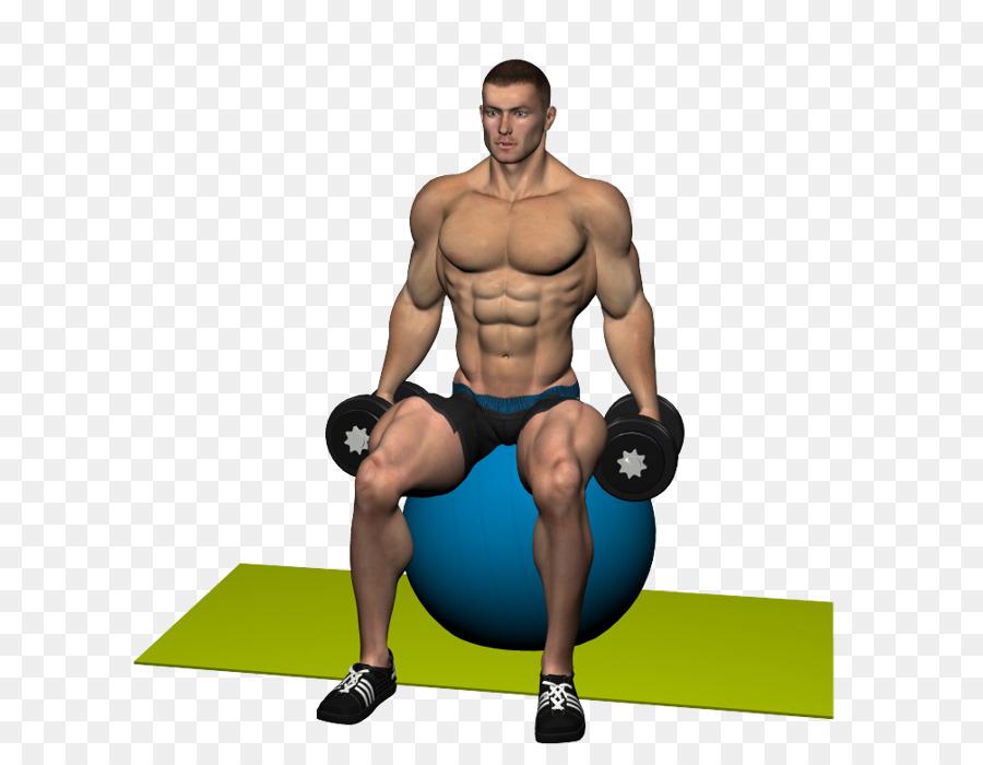 El entrenamiento del peso músculo Deltoides del Hombro Trapecio ...