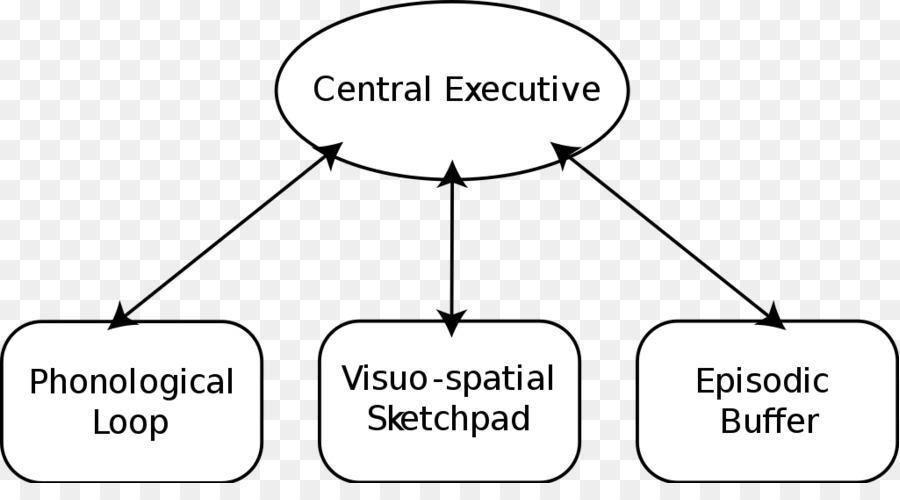Brain Baddeleys Model Of Working Memory Psychology Brain Png
