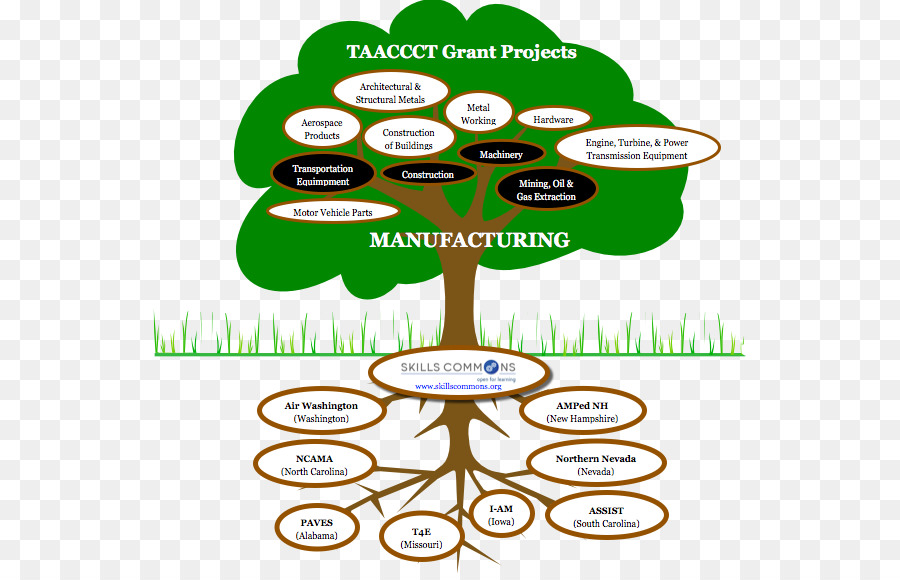 Information technology Tree Manufacturing - tree png download - 593 ...