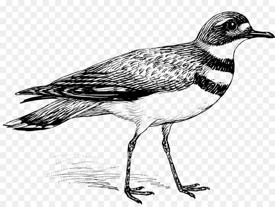 Pájaro libro para Colorear, imágenes prediseñadas - Aves Formatos De ...
