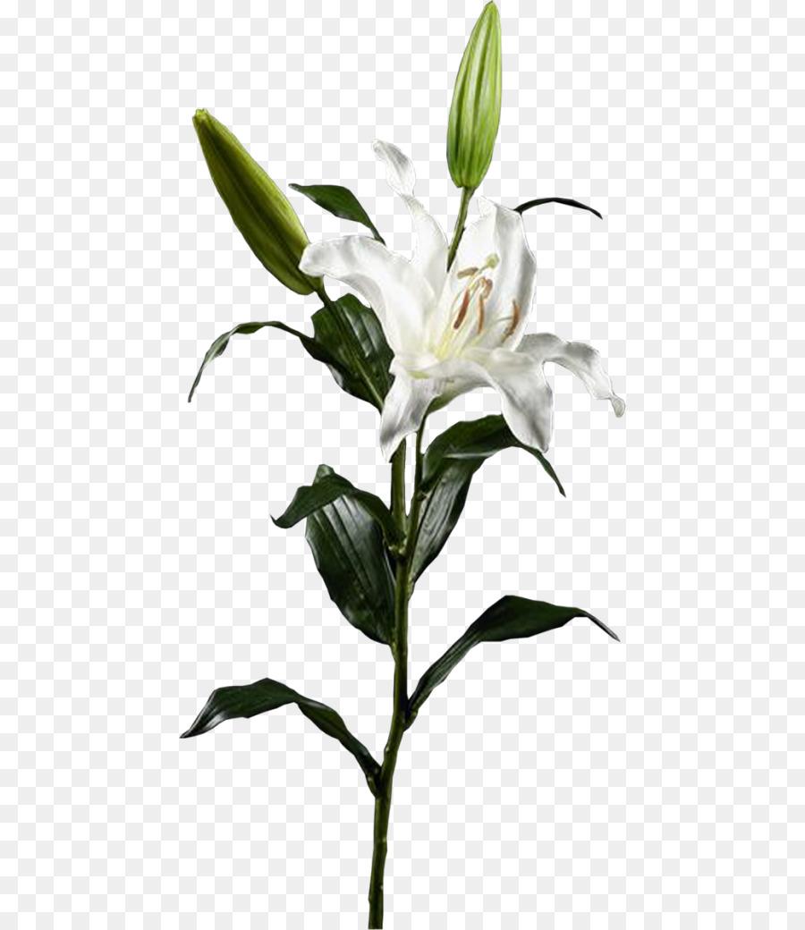 Lilium Flower Clip Art Flower Png Download 5001040 Free