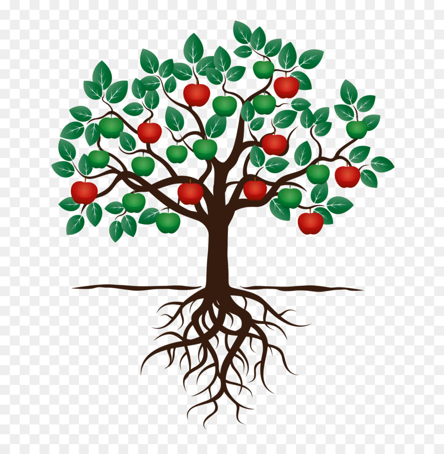Fruit Tree Drawing Apple Root Tree Png Download 1701 1702 Free