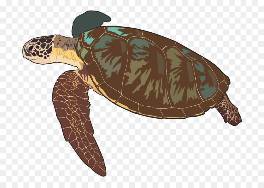 Tortuga boba Cuadro de tortugas marinas Las tortugas marinas de la ...