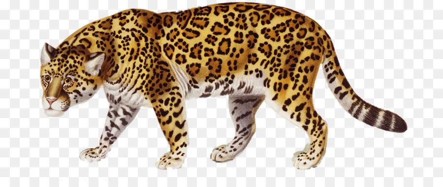 jaguar clip art jaguar png download 768 367 free transparent rh kisspng com jaguar clip art free jaguar car clipart