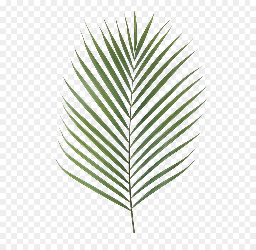 Ile Des Canaries De Palmier Dattier La Branche De Palmier