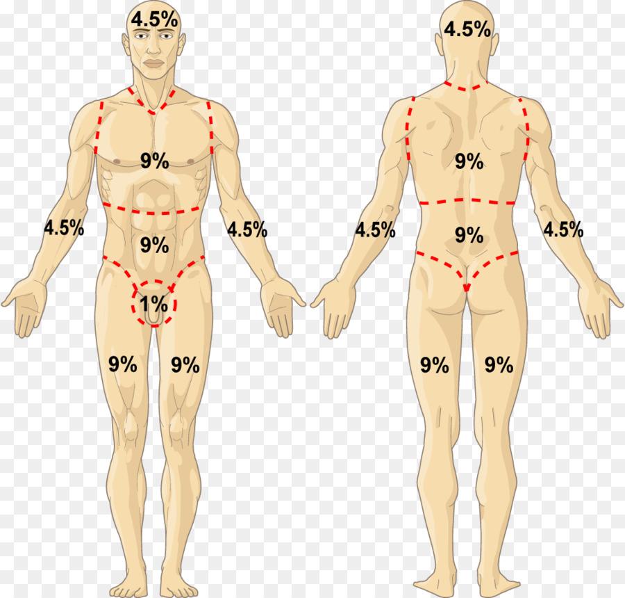 Homo Sapiens Human Body Hand Human Anatomy Hand Png Download