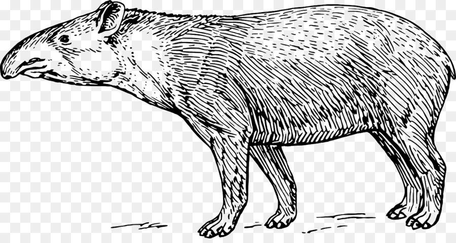 Malaya tapir Tapirus kabomani libro para Colorear, imágenes ...