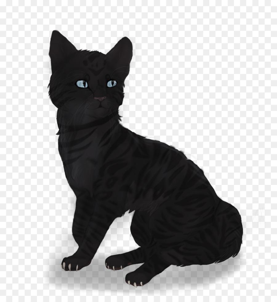 Bombay cat Manx cat European shorthair American Wirehair Korat ...