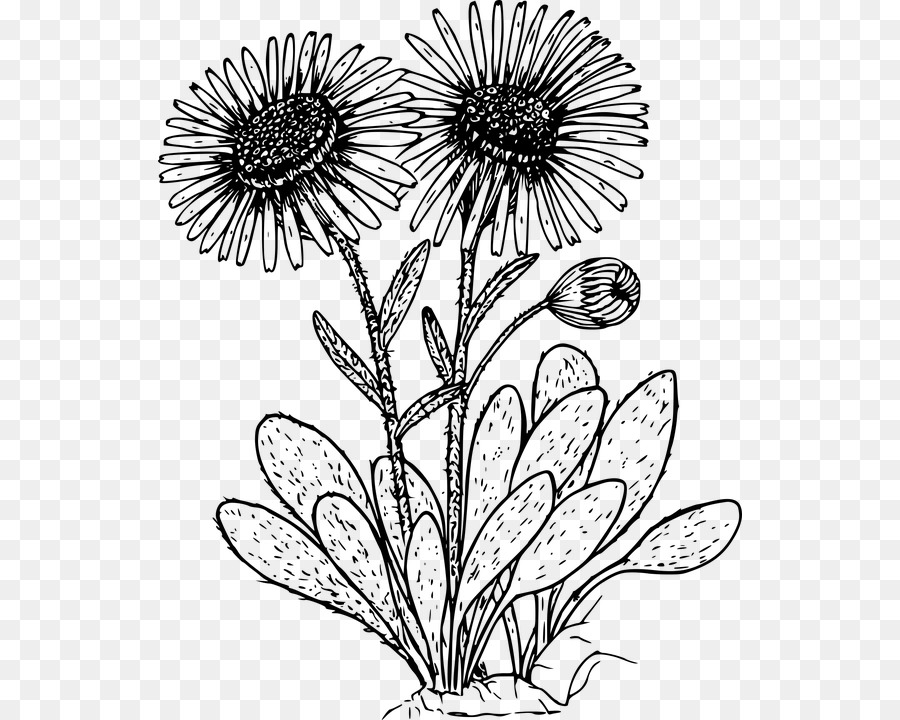 Drawing Wildflower Coloring Book