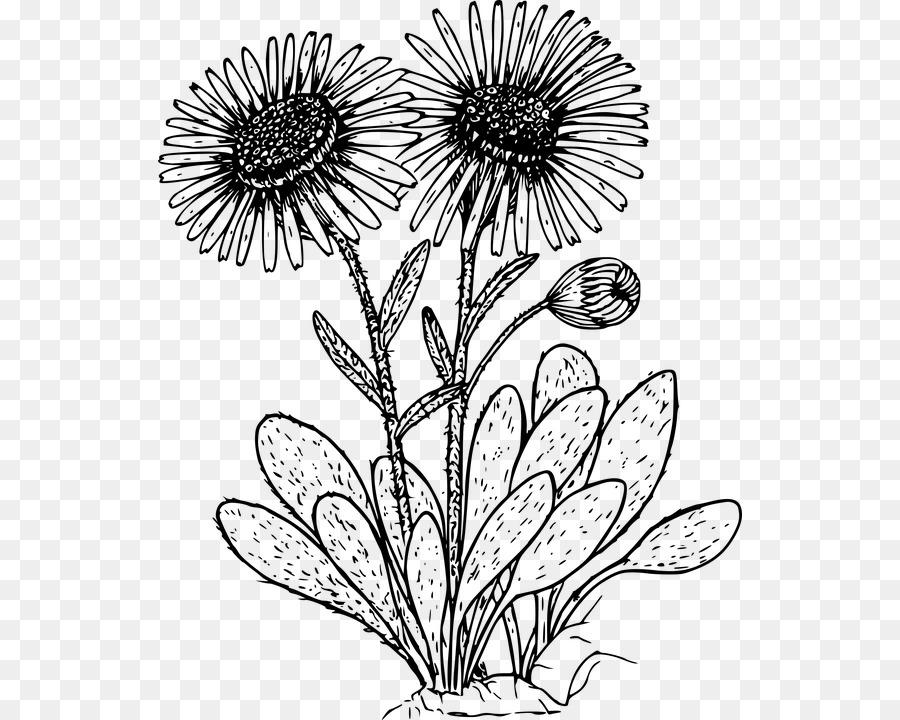 Dibujo de flores Silvestres de libro para Colorear - flor Formatos ...