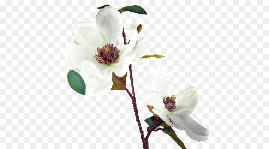 Magnolia Cut Flowers Fleur Blanche White Flower Png Download 500