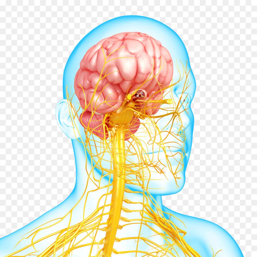 Nervous system disease Mental disorder Autonomic nervous system ...