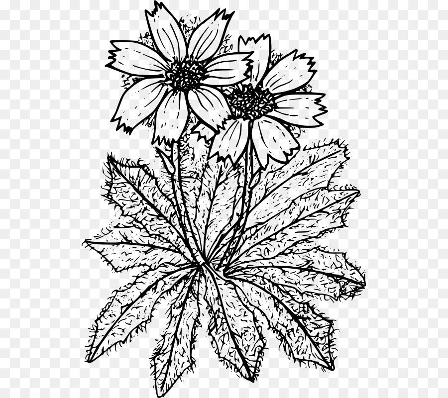 Diseño Floral libro para Colorear de flores de Corte - crisantemo ...