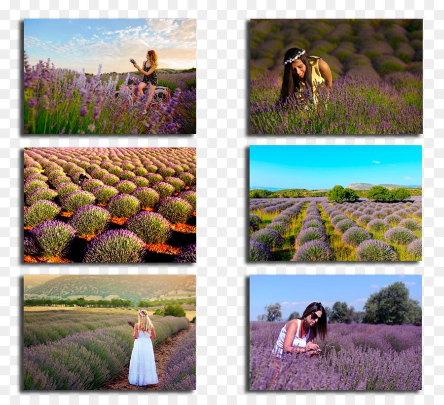 Lake Salda Kuyucak Köyü Lavender Gardens Keçiborlu Pamukkale