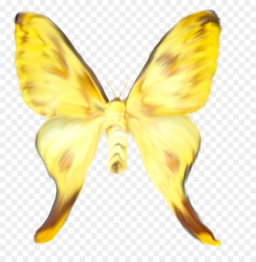 Kelebek Boyama Pieridae Sarı Ipekböceği Suluboya Kelebek Png Indir