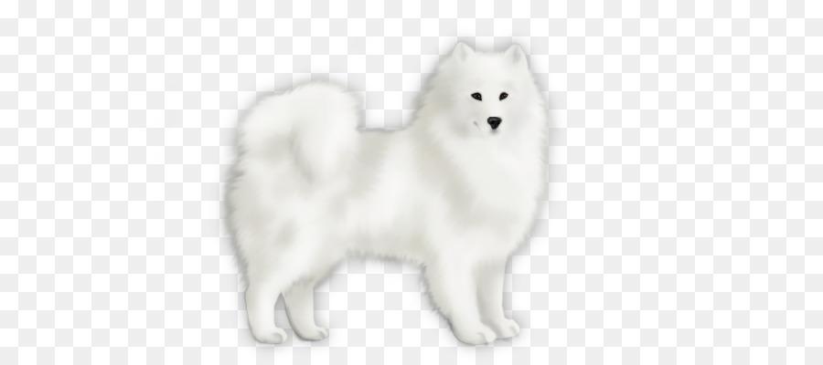 Japanese Spitz American Eskimo Dog Pomeranian Finnish Spitz German