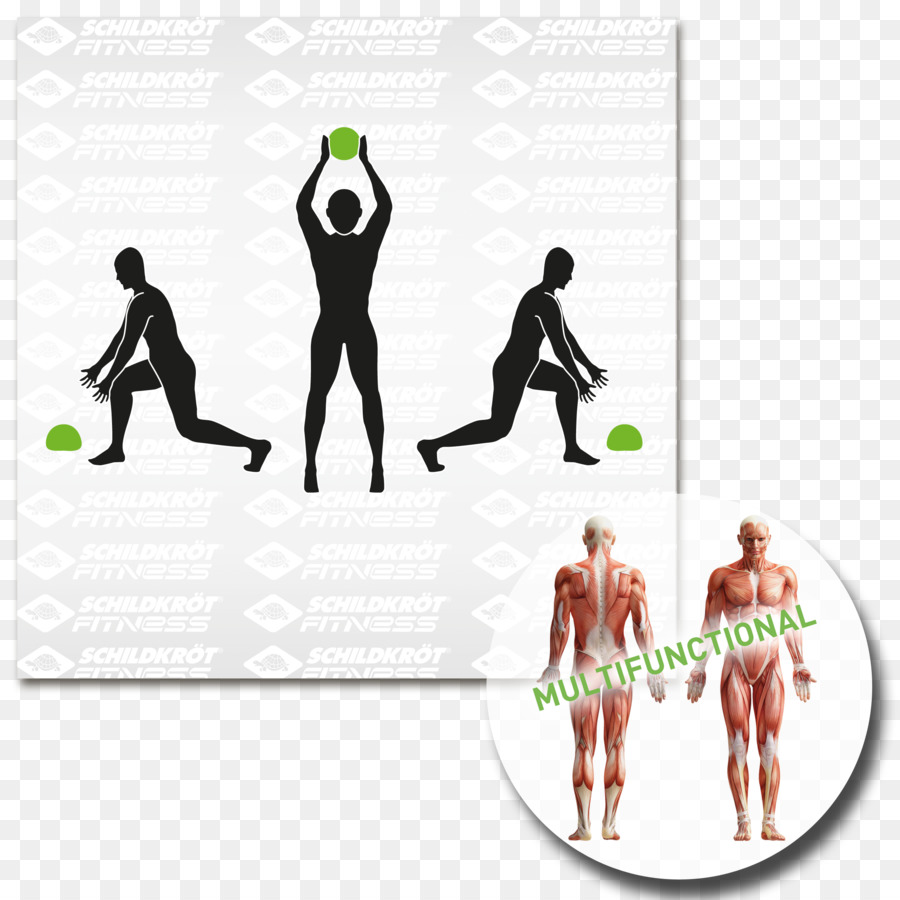 Pull-up Physical fitness Muscle Exercise Anatomy - others png ...