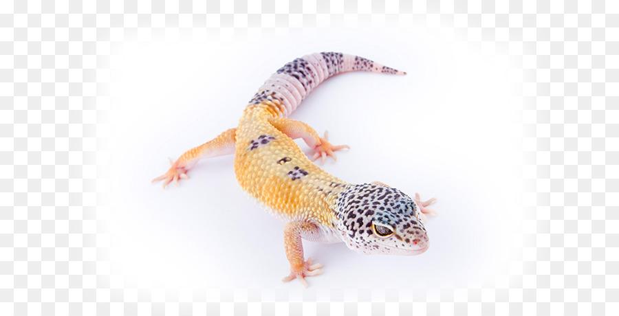 Común leopard gecko Reptiles Lagarto Mascota - lagarto Formatos De ...