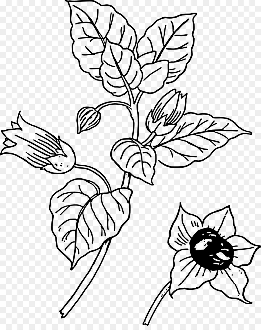 Belladonna Botany Clip Art Black And White Flower Outline Png