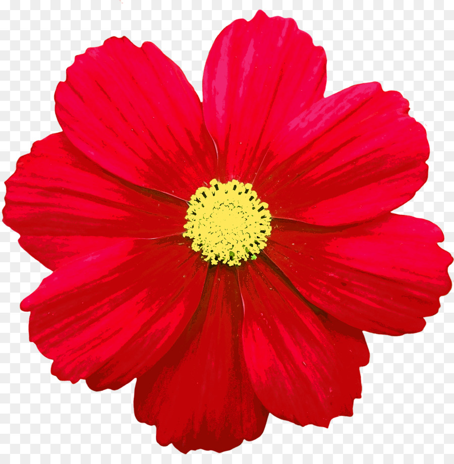 Flower Common daisy Red Clip art - flower png download - 1278*1280 ...