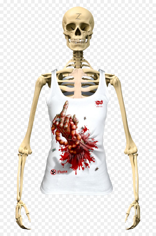 Human Skeleton The Skeletal System Human Body Vertebral Column