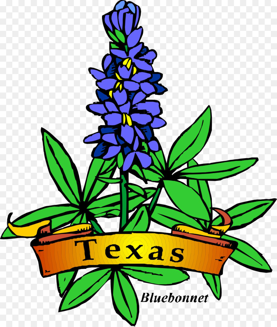 texas bluebonnet texas bluebonnet drawing clip art bluebonnet rh kisspng com bluebonnet clipart png texas bluebonnet clipart