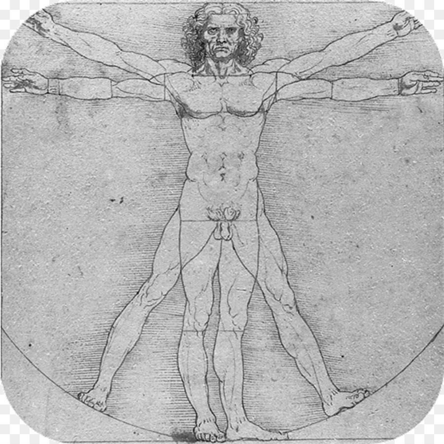 Vitruvian Man Anatomical Drawings Anatomy Human body - others png ...