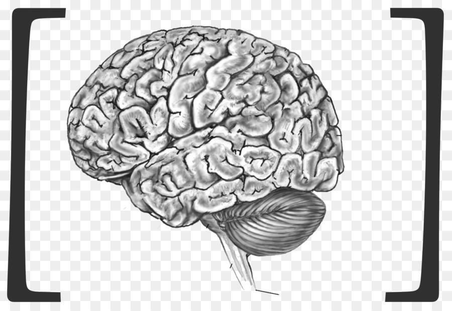 El cerebro humano Proyecto Blue Brain cuerpo Humano Anatomía ...