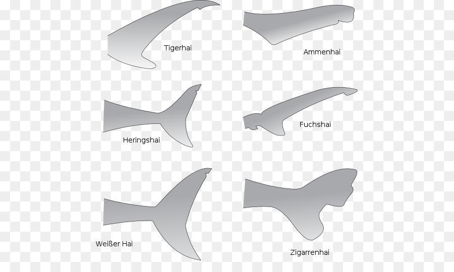 Tiburón anatomía Gran tiburón blanco de la Aleta de la Cola ...