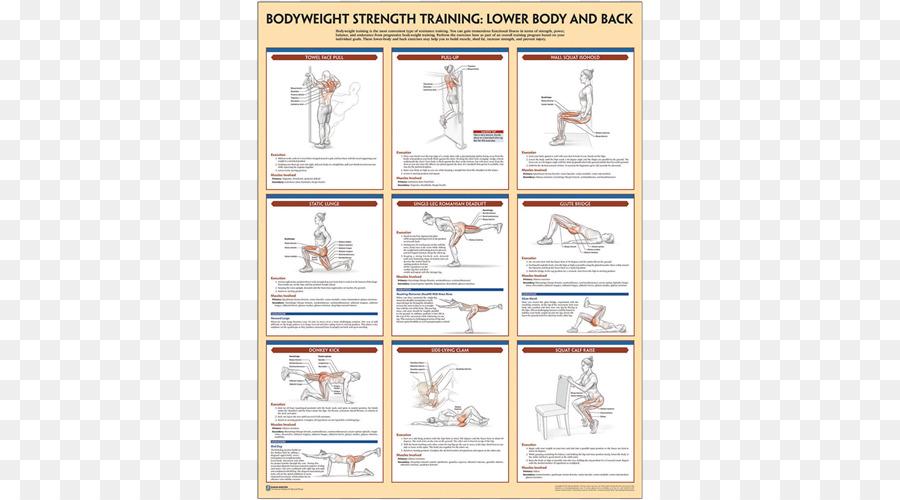 Bodyweight Strength Training Anatomy Bodyweight Exercise General