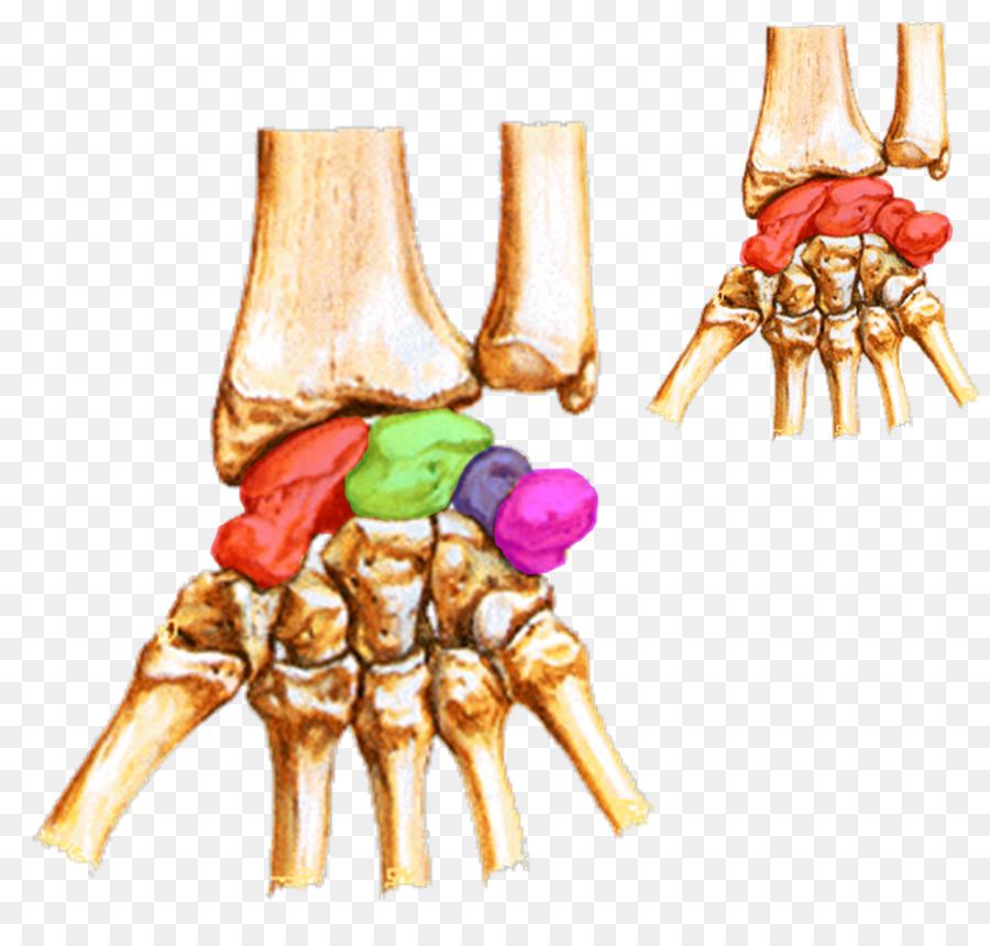 Carpal Bones Wrist Carpal Tunnel Lunate Bone Hand Png Download