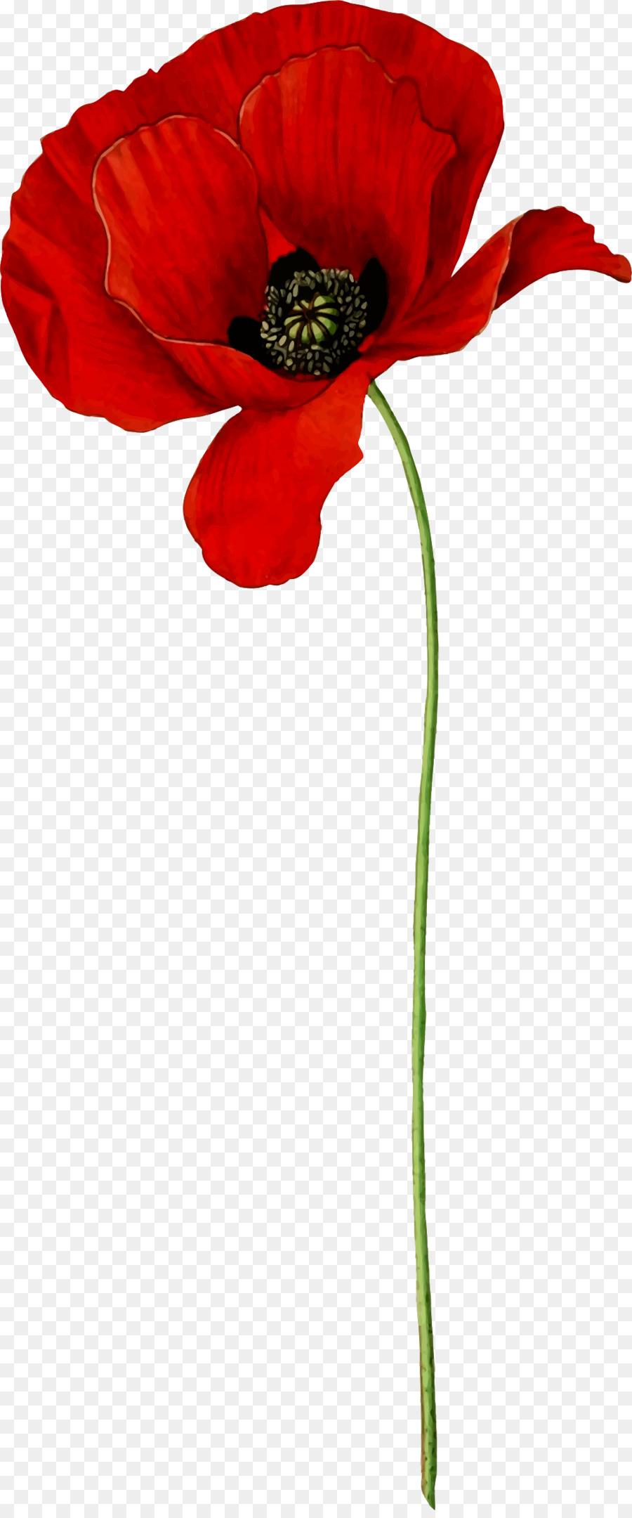 Opium Poppy Flower Common Poppy Clip Art Flower Png Download 995