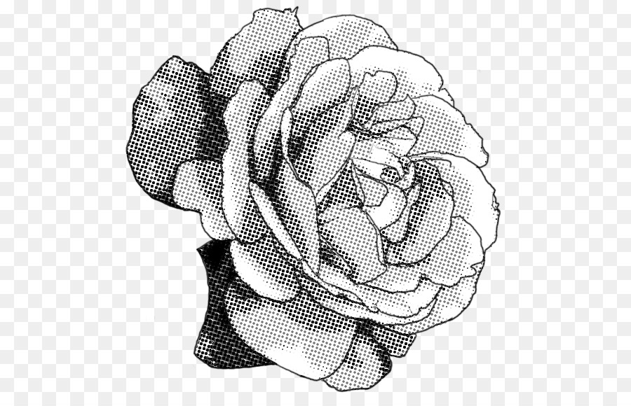 Line Drawing Of Rose Plant : Black and white rose drawing png download free