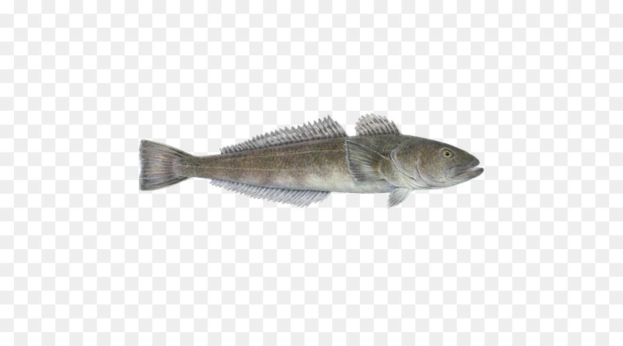 La caballa Acuario de Monterey Bay Bacalao Barramundi productos de ...