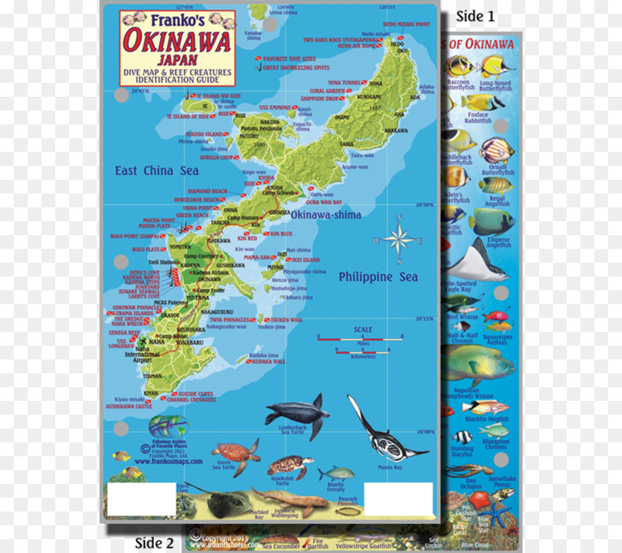 Okinawa Island Coral Reef Map Map Png Download 800 800 Free