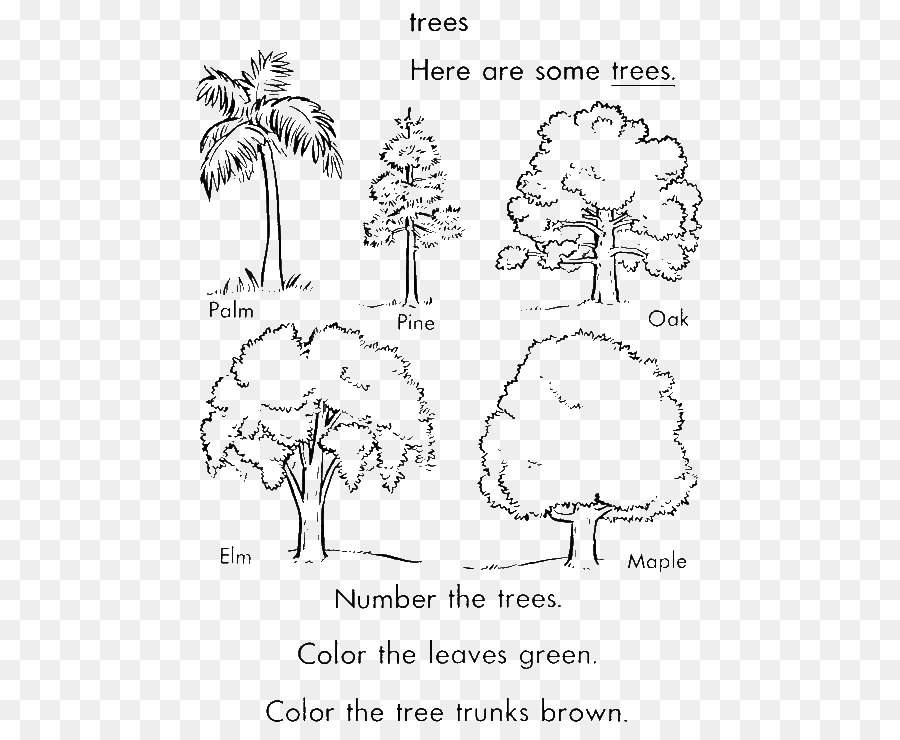 Coloring Book Tree Arecaceae Trunk Pine
