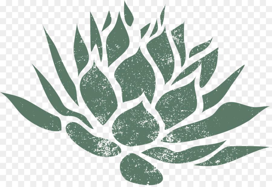 столетник фото растения