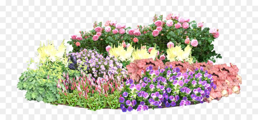 Englisch Lavendel Bettwäsche Garten Rasen Einjährige Pflanze